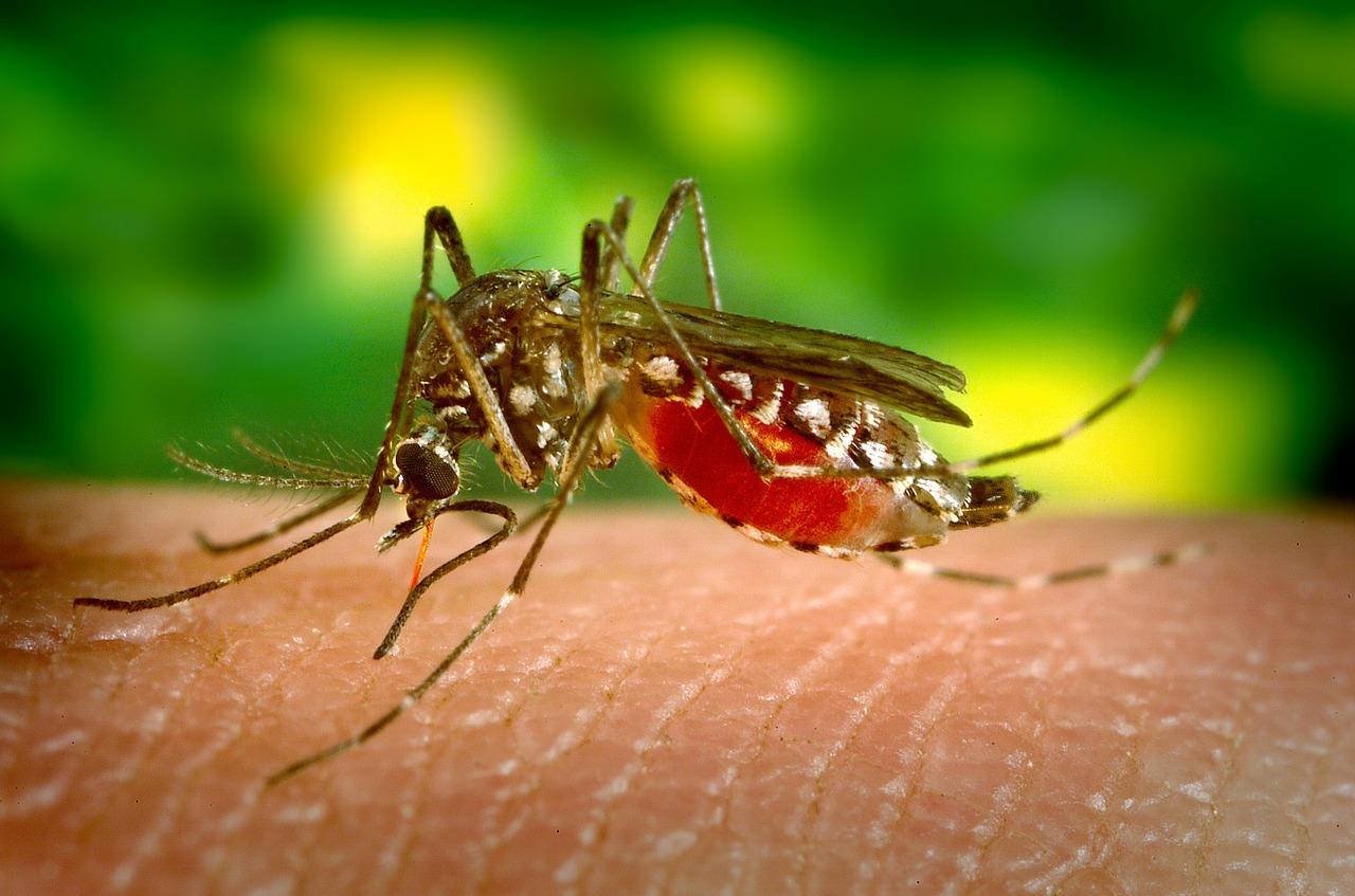 Ukąszenia przez komara